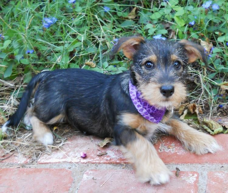 Pin By Frances Price Nevin On Just Cute Puppies Puppy Photos Dachshund Mix