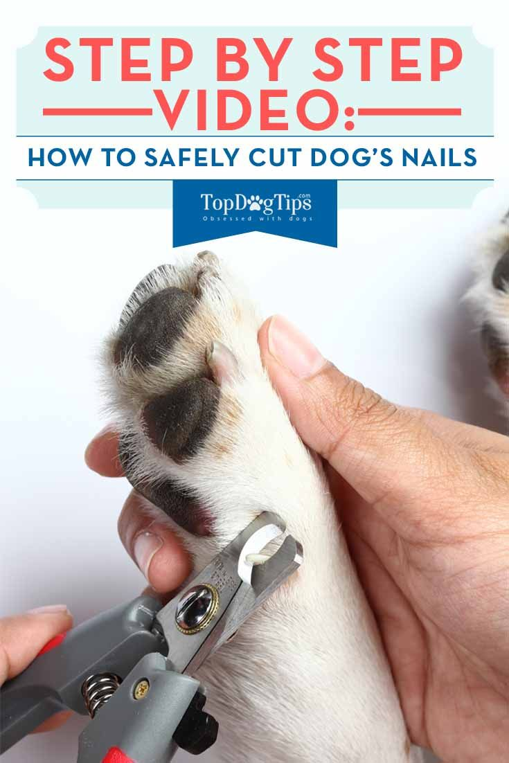 How To Cut Your Dog\'s Nails (Without Being Afraid) | Black nails ...