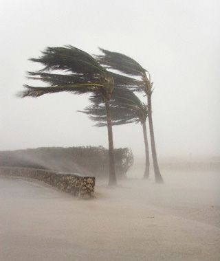 Image result for trees in hurricane