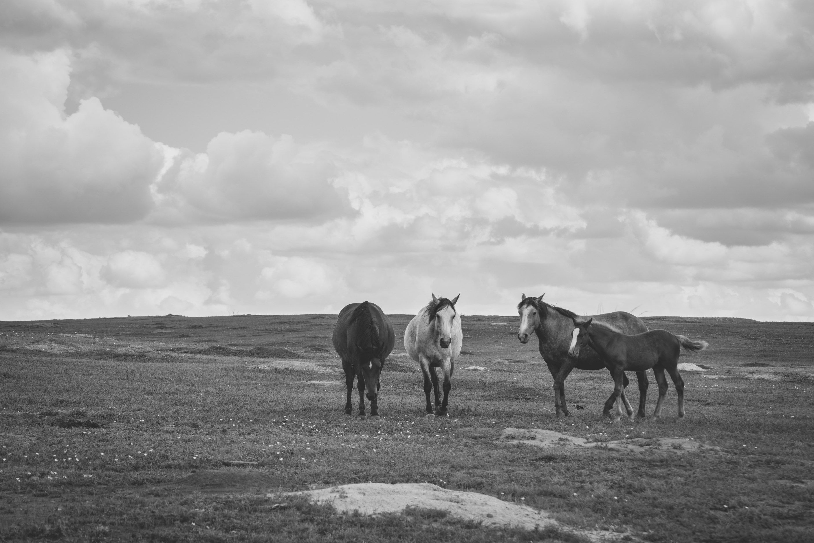 Theodore Roosevelt National Park In Black And White
