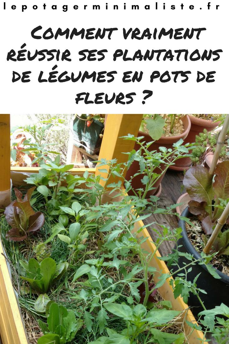 Comment vraiment réussir la plantation des légumes en pot