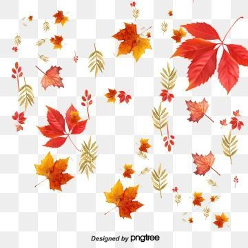 Autumnleavesfalling Leaf Clipart Maple Leaf Clipart Autumn Leaves