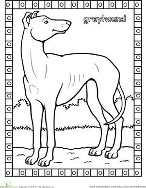 greyhound coloring page cakepinscom
