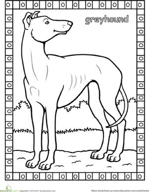 greyhound coloring page cakepinscom