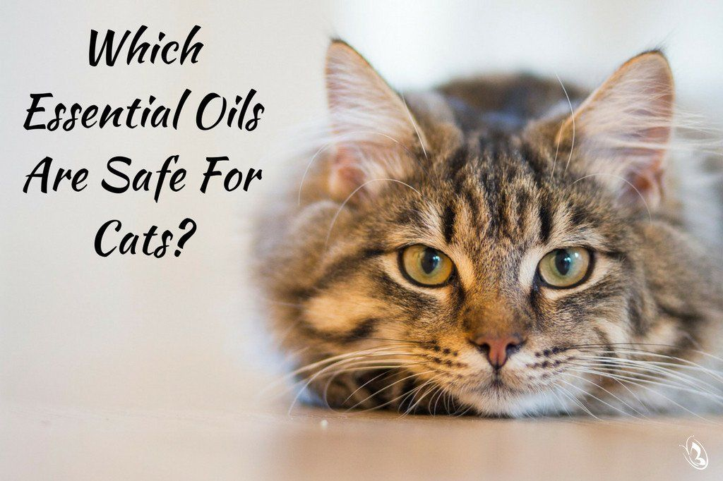 Which Essential Oils Are Safe for Cats Cats, Pets