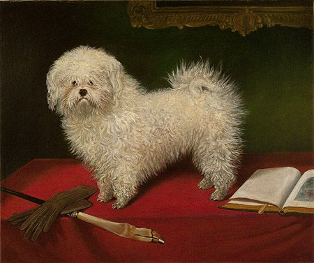 Maltese On A Table William Secord Gallery With Images Canine