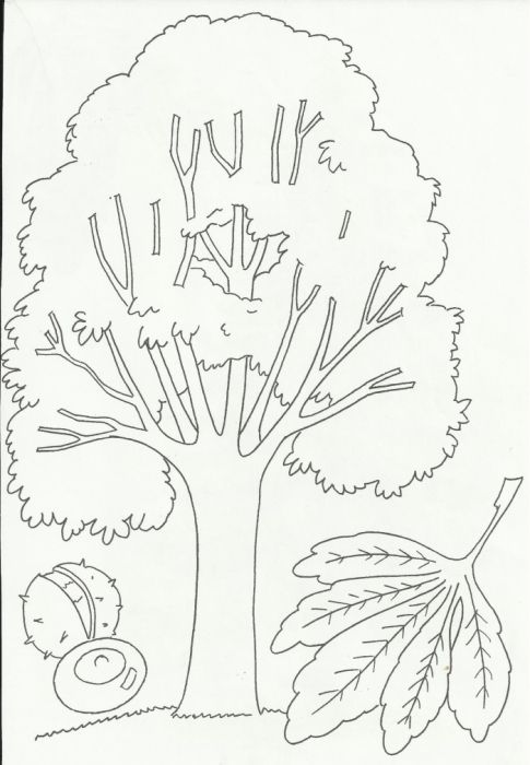 Раскраска Деревья и листья Обсуждение на liveinternet
