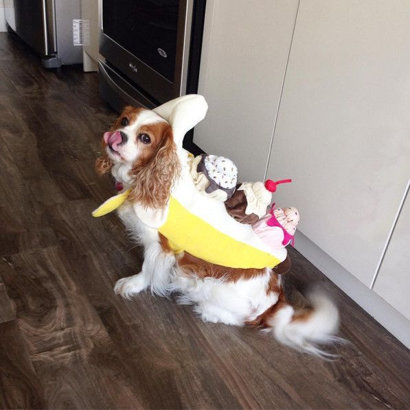 Banana Split Best Dog Costumes Dog Costumes Banana Split