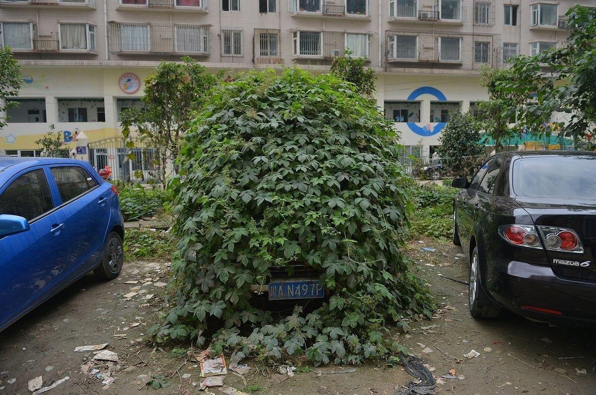 """10月17日,四川省成都市,在双流华阳一小区外停放着一辆长满藤蔓的""""僵尸车"""",据当地住户介绍,该车牌为川AN497P的蓝色面包车已在此停放了一年多。"""