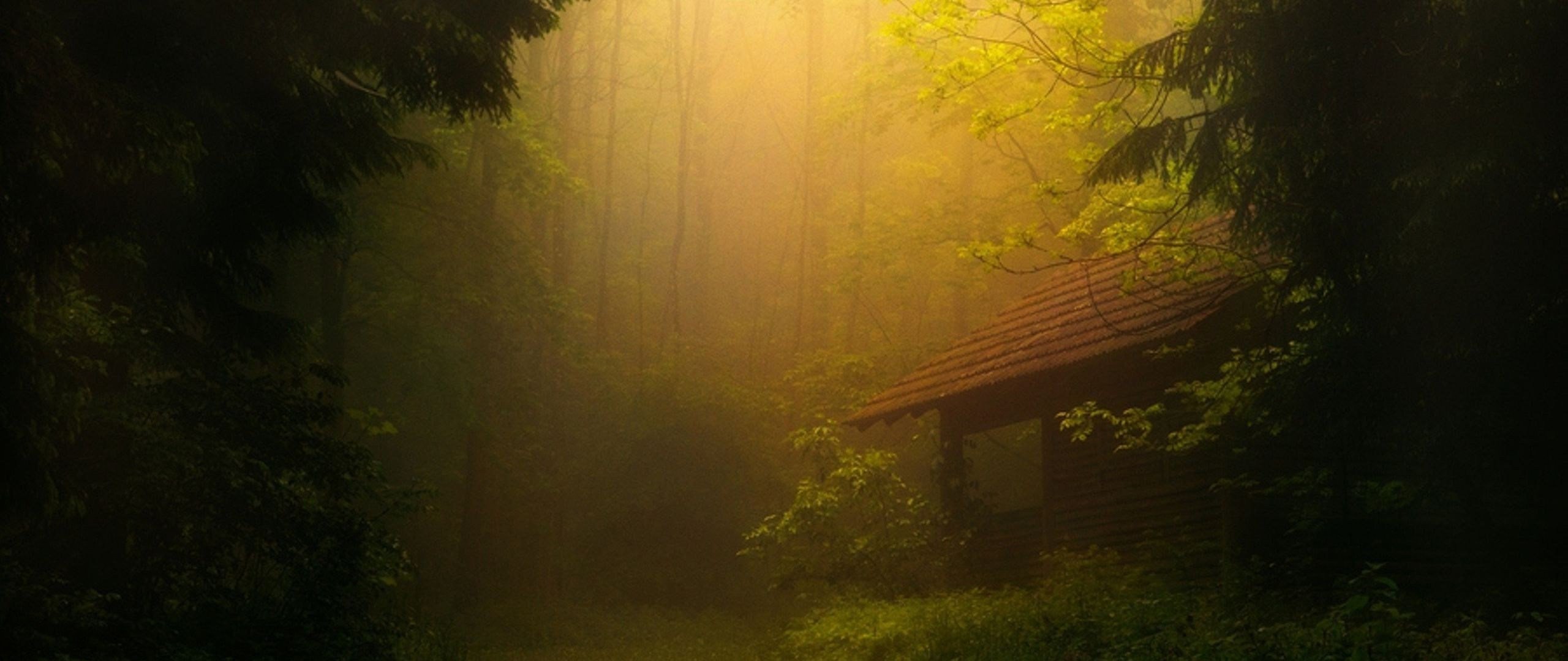 2560x1080 Wallpaper fog, trees, forest, thicket