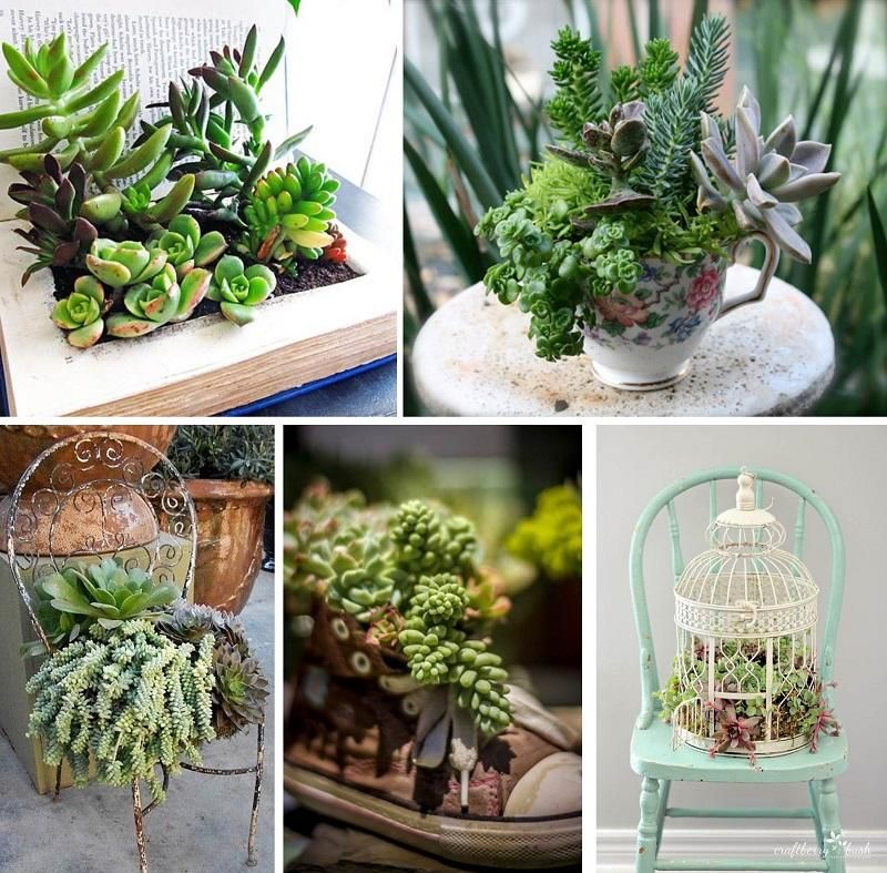 7 decoranco con cactus y suculentas Decohunter