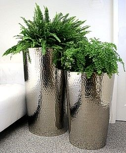 Ferns In Hammered Stainless Steel Planters Like The
