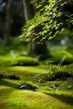 Nature - Moeder Natuur