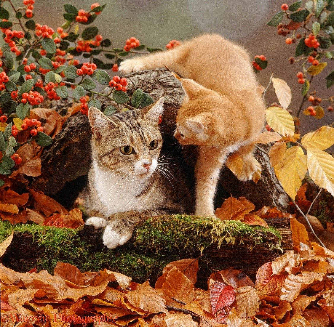 Cat With Ginger Kitten Among Autumn Leaves Photo Fall Cats Cats Cute Cats