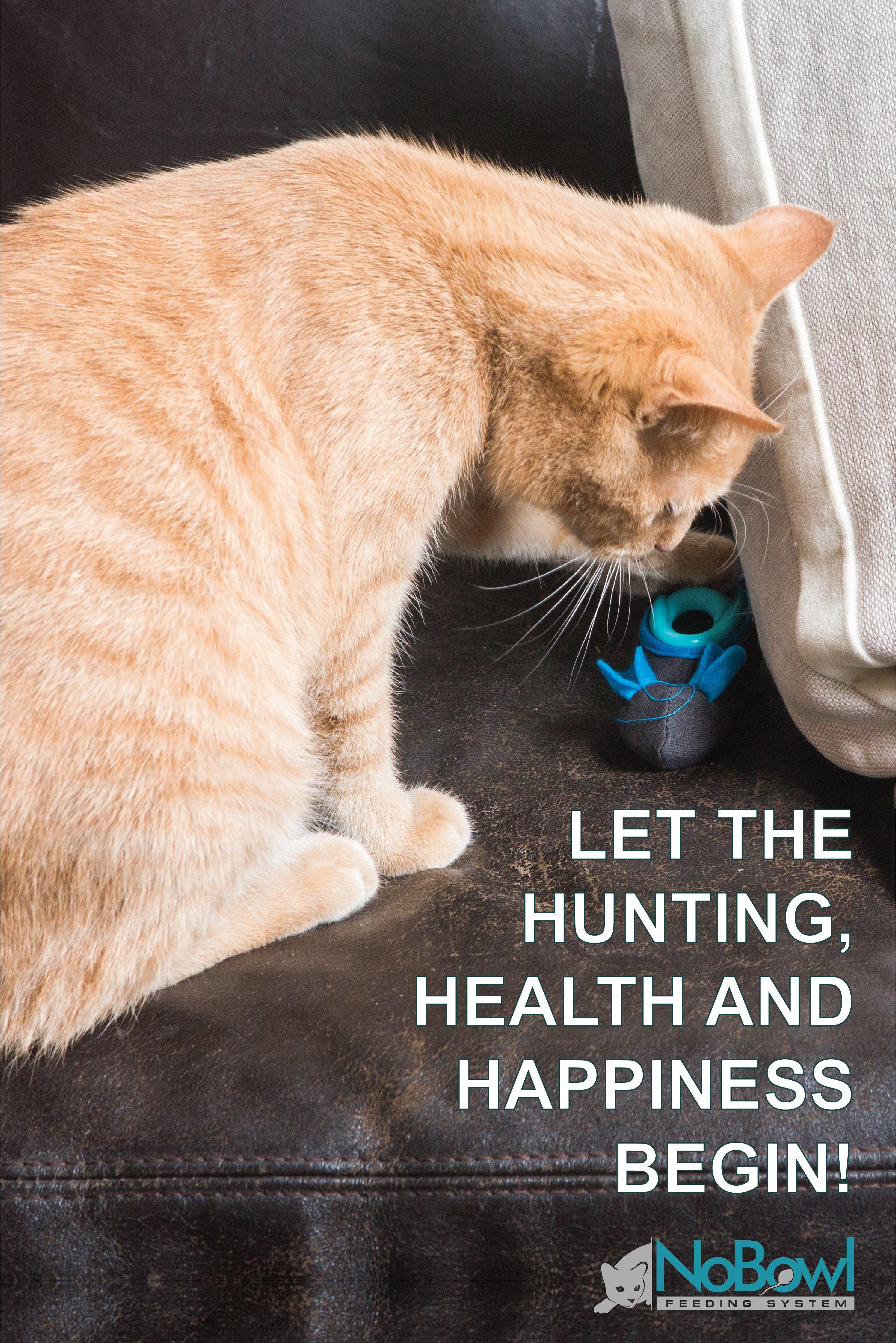 Indoor Hunting Feeder Cats Litter Box Cat Feeder