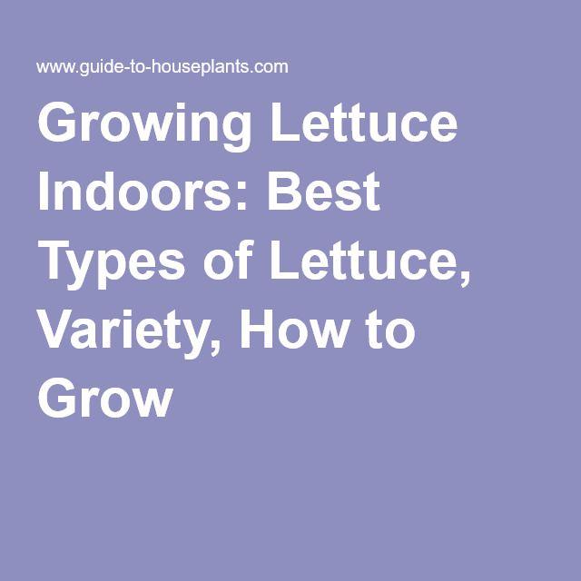 Growing Lettuce Indoors Best Types Of Lettuce Variety 640 x 480