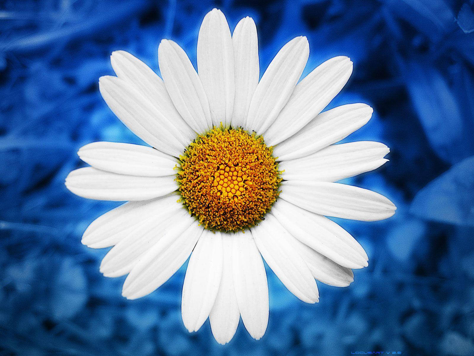Pris sur le net photoimagemusiquevideo ect pris sur le net au pris sur le net april birth flowersdaisy izmirmasajfo