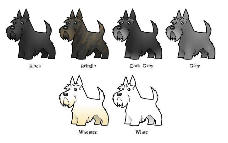 Pin de triple graces en scottish terriers pinterest for Vajilla animales