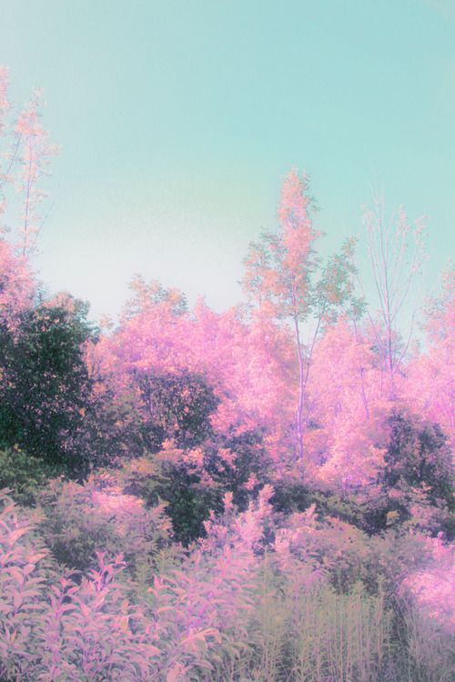 Beautiful Love The Fuzzy Effect Flowers Nature Pink Nature Pastel Aesthetic