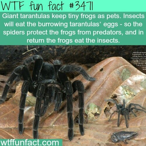 Épinglé par PandaBear c: sur Wtf facts | Weird facts, Wtf ...