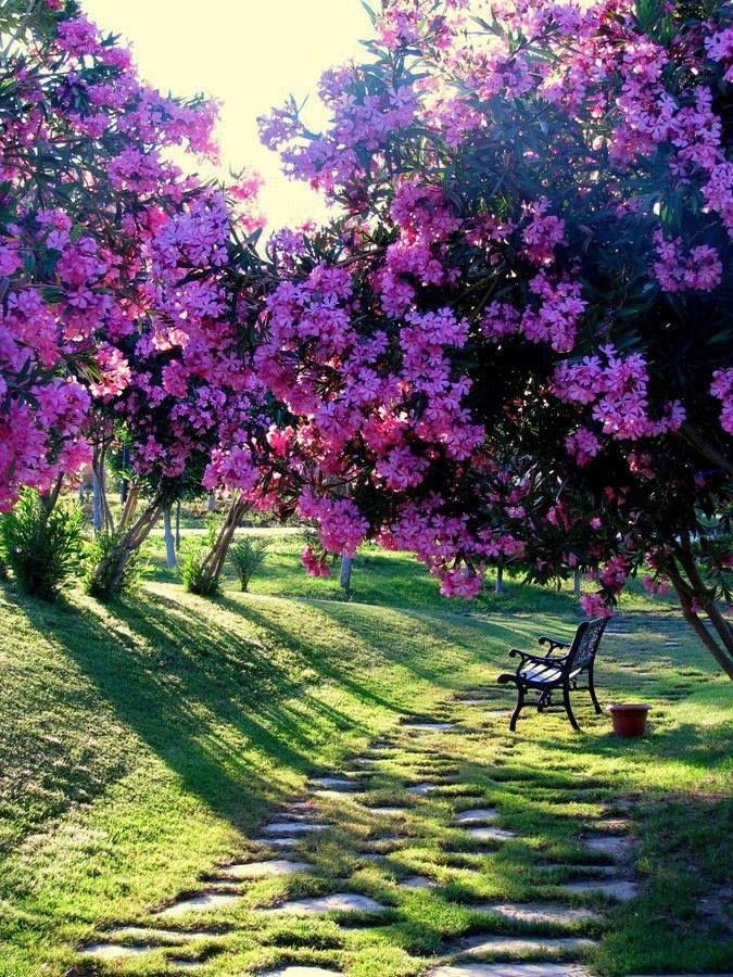 paarse bloesem met tegenlicht