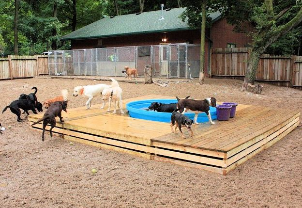 canine pool with deck