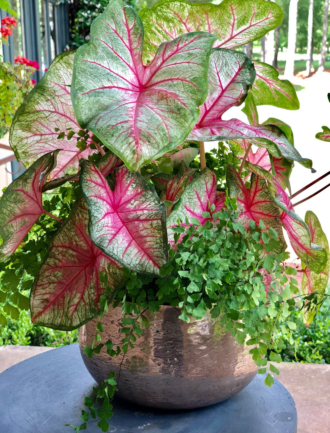 Summer Planter Tips And The Perfect Plants For Full Sun Full