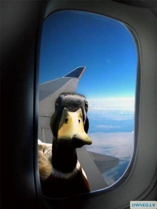 There's... something on the wing.