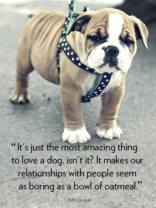 30 Dog Quotes That Will Melt Your Heart Dog Quotes Animal