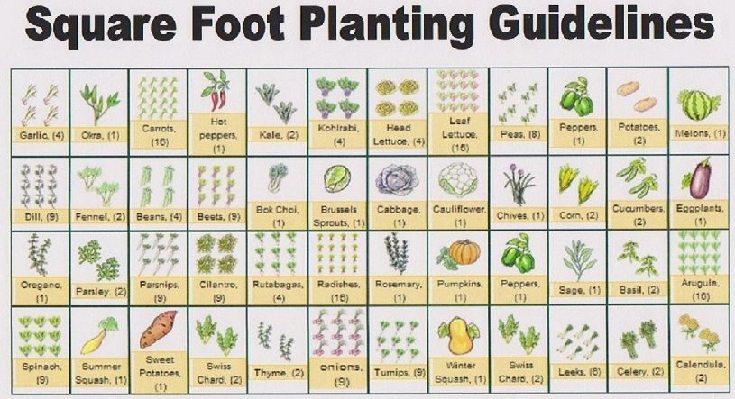 Free Printable Garden Planner Sheets To Get A Copy Of This Guide To Vegetables And How Many To