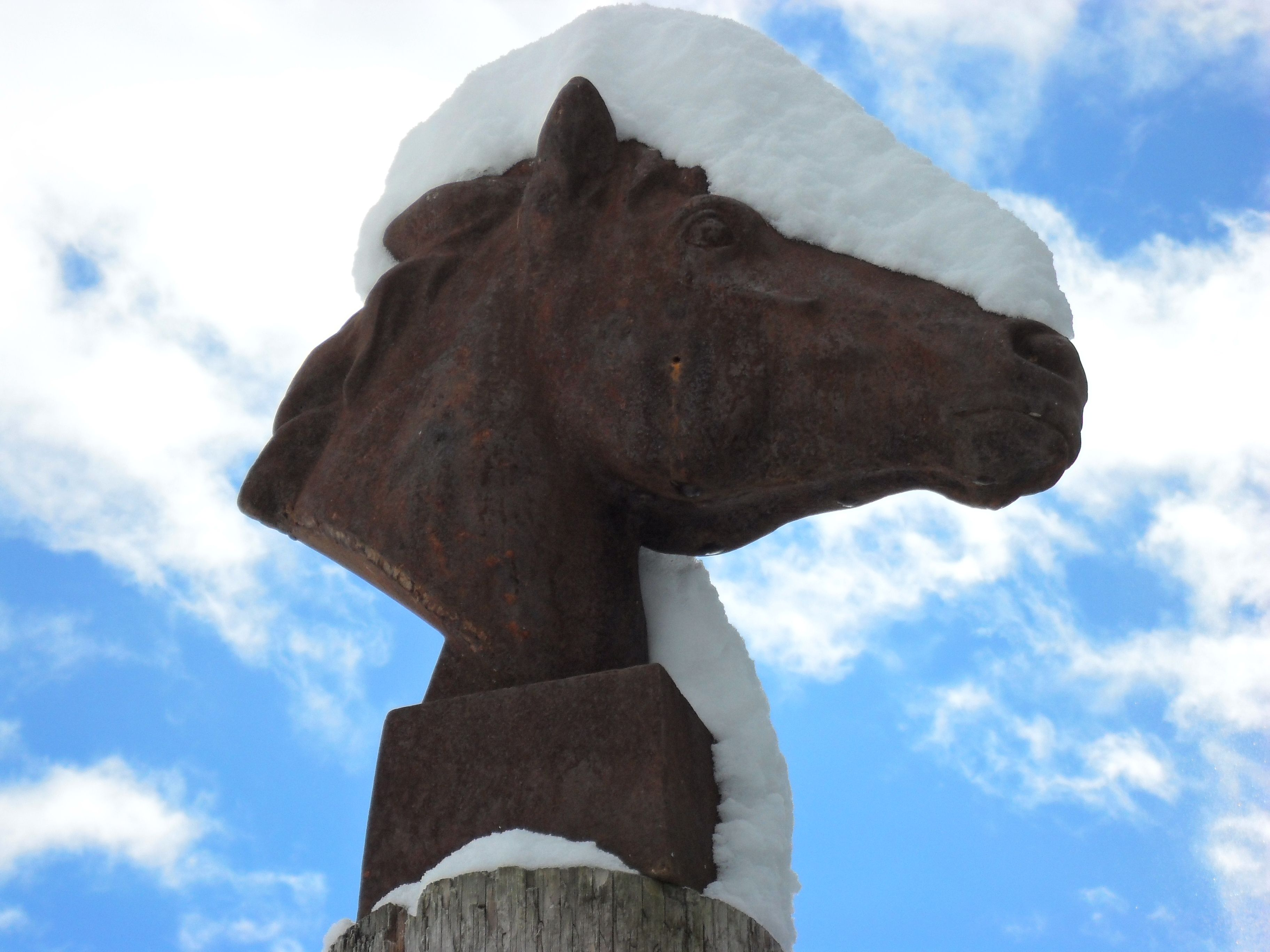 Cast Horse Head