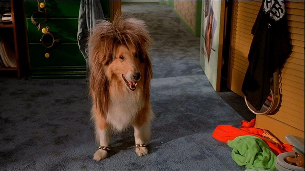 I'm watching Wayne's World and they just showed Garth's dog