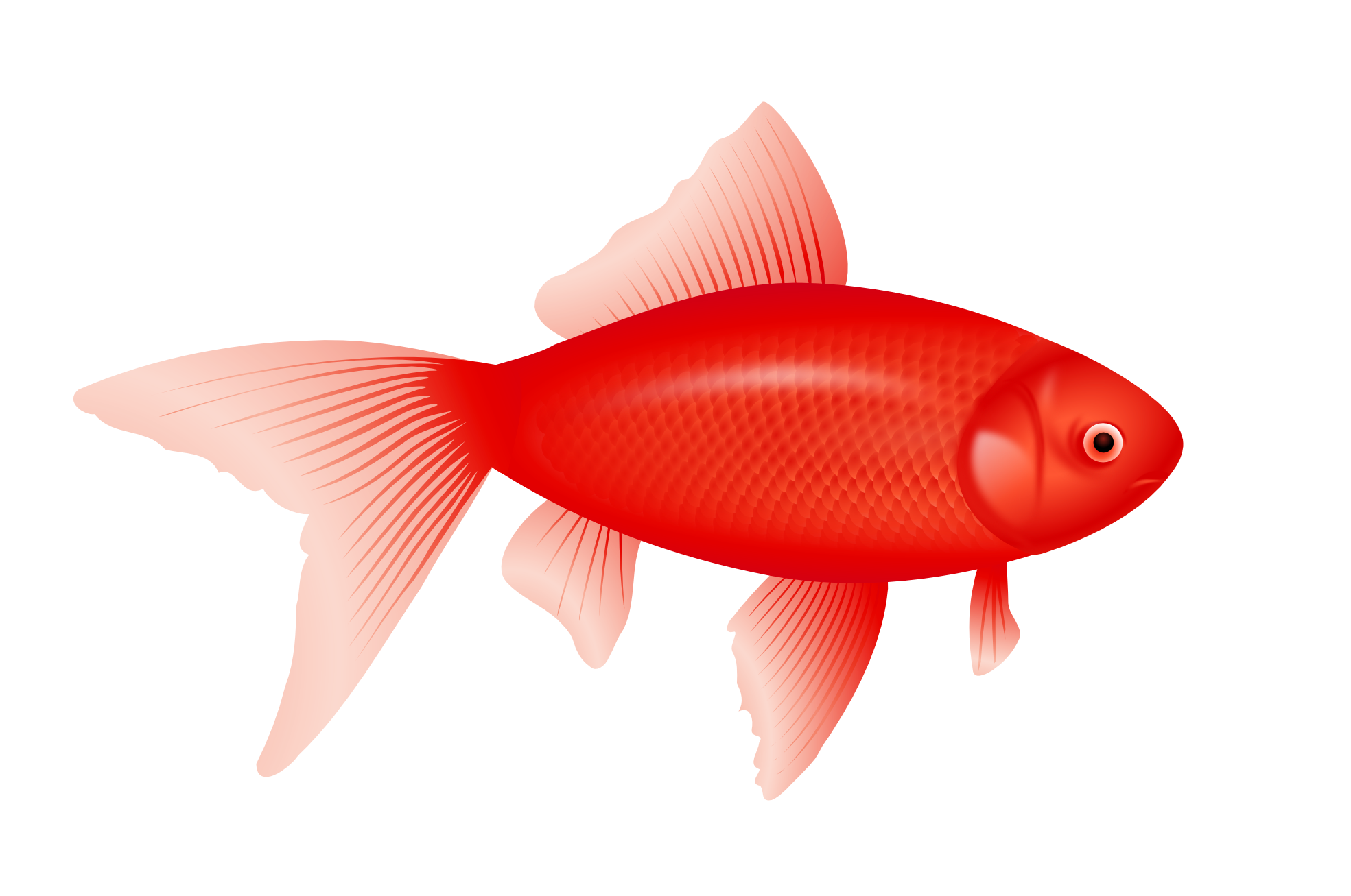 red <b>fish</b> PNG image - red <b>fish</b> PNG image | Peces ...