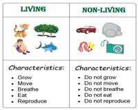 Living And Nonliving Things Worksheets Pdf Google Search Living And Nonliving 2nd Grade Worksheets Social Studies Worksheets