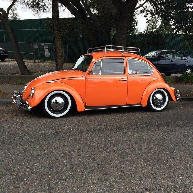 Orange Bug. Berkeley, California