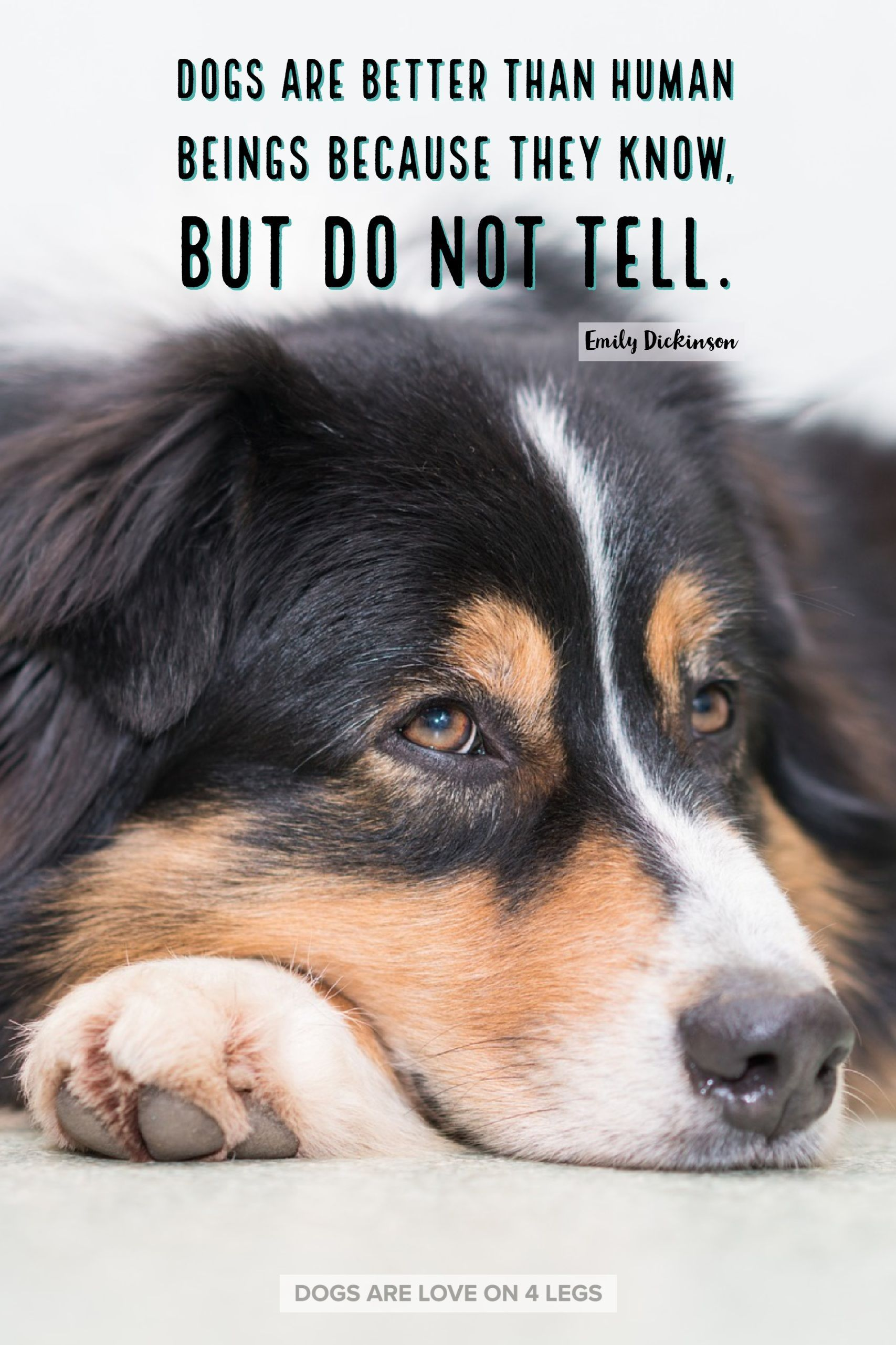 Dog quote dogs are better than human beings dog dog