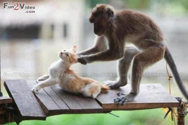 Картинки по запросу Animals Can Be Jerks
