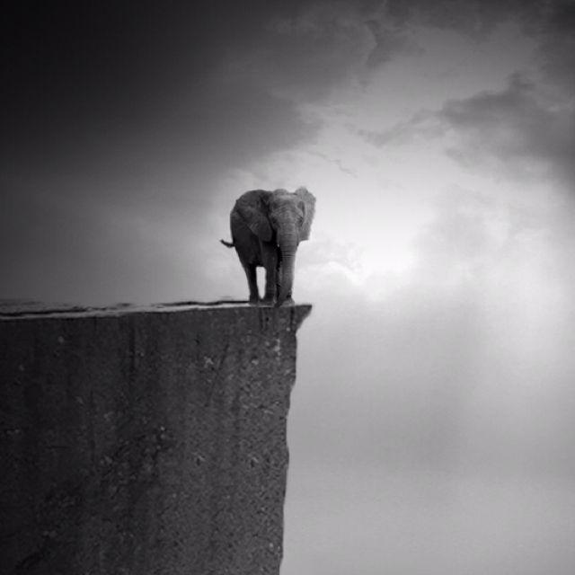 Lonely elephant by Ilayda Portakaloglu