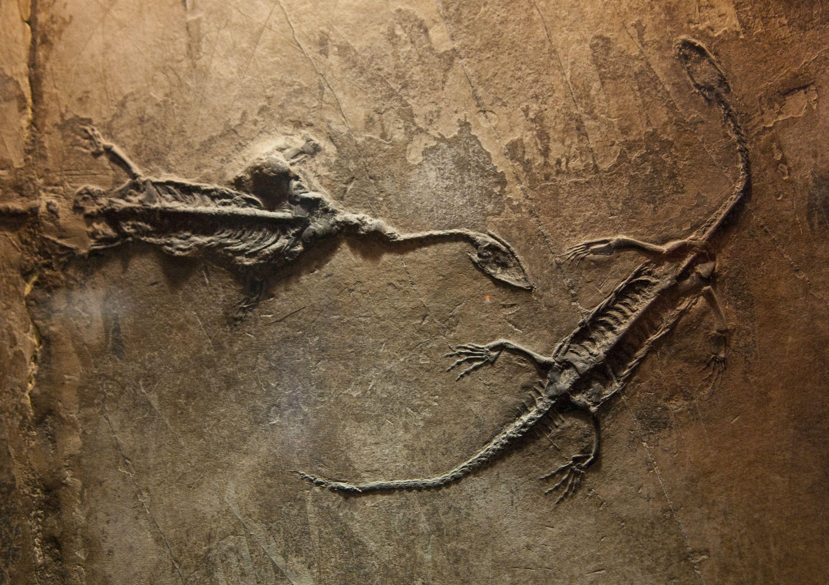 Dinosaur bones dating
