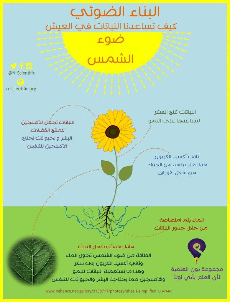 كيف تساعدنا النباتات في العيش Map Lias Dandelion