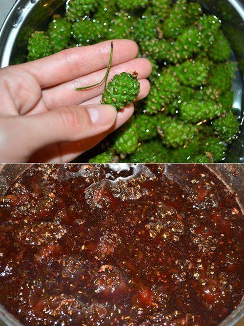 как приготовить варенье из сосновых шишек