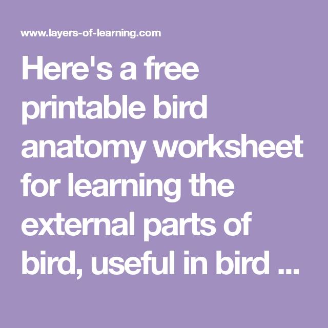 Printable Bird Anatomy Worksheet | education | Pinterest | Bird ...