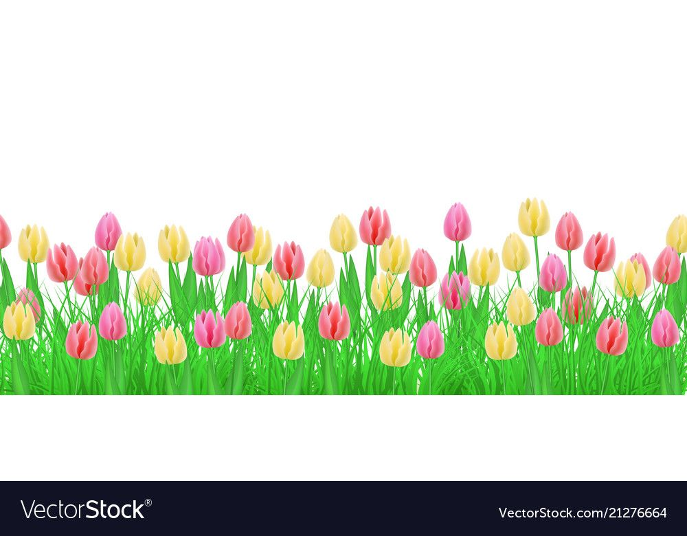 Green Grass Tulip Flowers Border Frame Vector Image On Vectorstock Flower Border Tulips Flowers Flowers