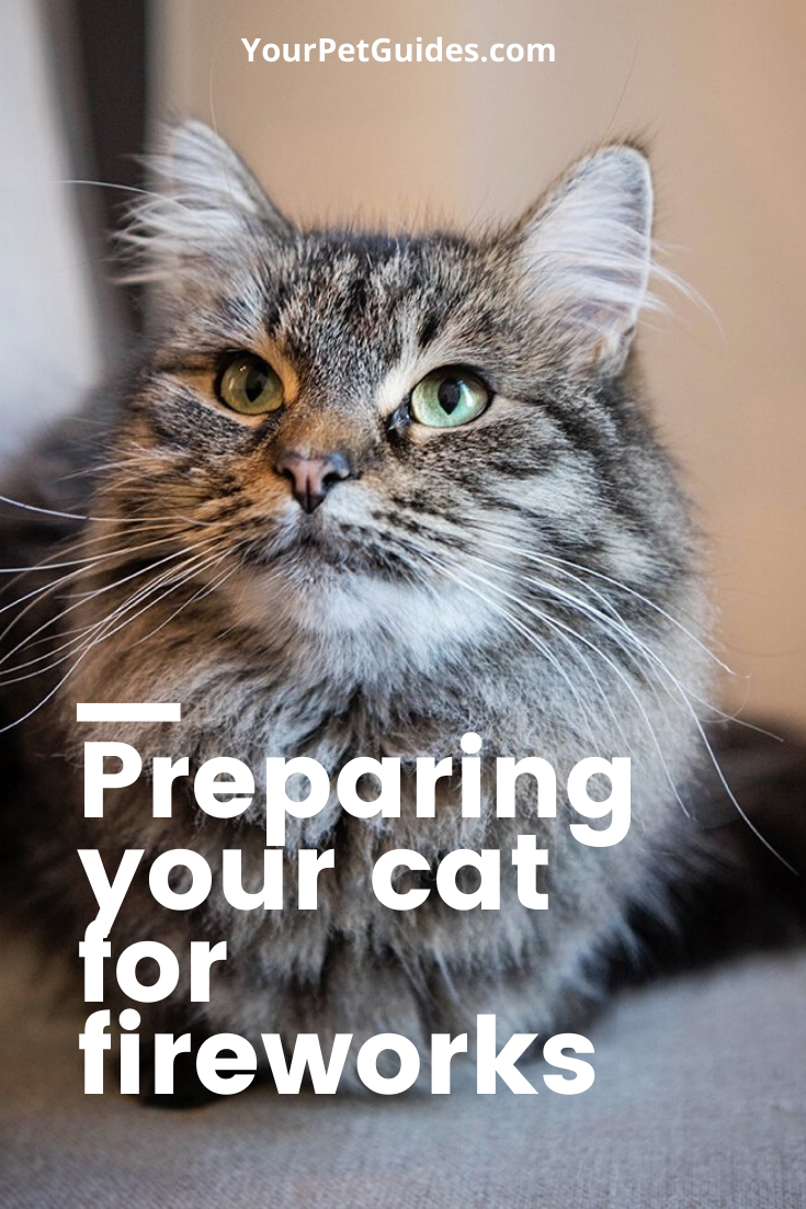 Preparing Your Cat For Fireworks In 2020 Cats Kitten Health American Animals