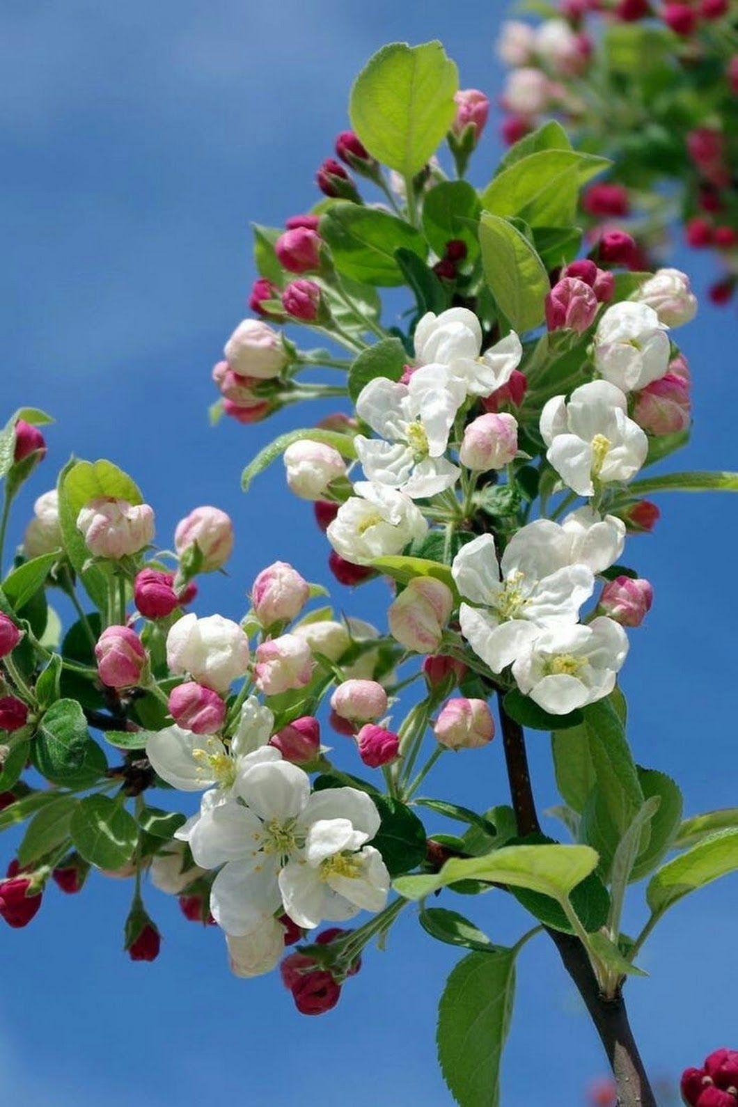 Schn Grow Rose Garden Pinterest Flowers White Flowering