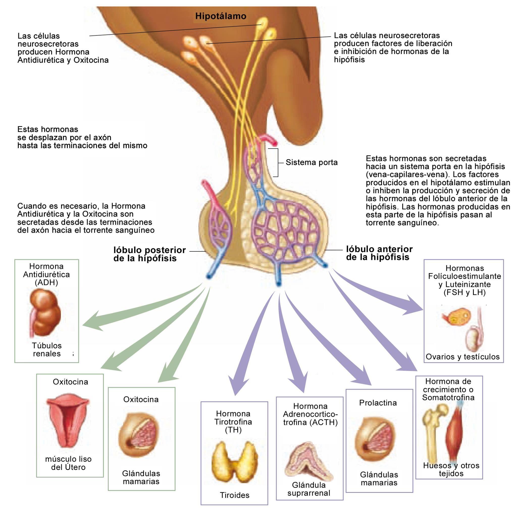 Pin von Monica Mendoza auf Nutrición y medicina   Pinterest