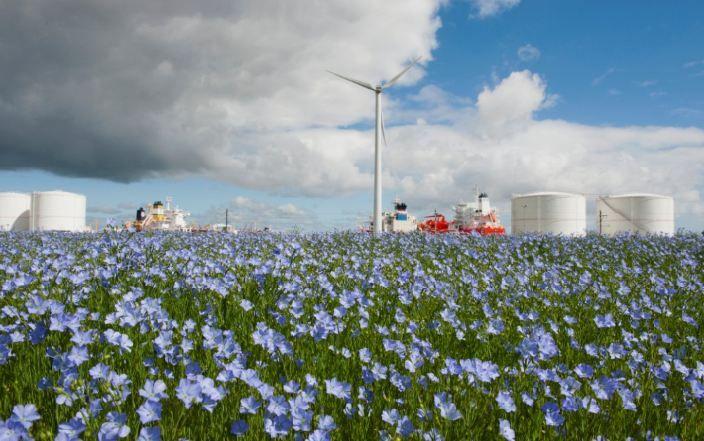 Westpoort Amsterdam decor vlasveld Aquamaryn Natuurverf - Dit najaar de eerste 'verse natuurverf' met lijnolie van eigen bodem.  http://bit.ly/Natuurverf-Aquamaryn