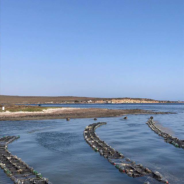 Visit the Guerrero oyster farm in #SanQuintín. 🌊☀️☁️ The best oysters in #BajaNorte arrive here!  📸 bajafuntraveltours     #bc #Baja #bajanorte #mexico #vacation #cool #travel #travelling #roadtrip #vacay #fun #beauty #nature #beautiful #city #views #wanderlust #adventure #trip #oyster #oysterfarm #mothernature #paradise #explore #discover #tgif #weekend #friday