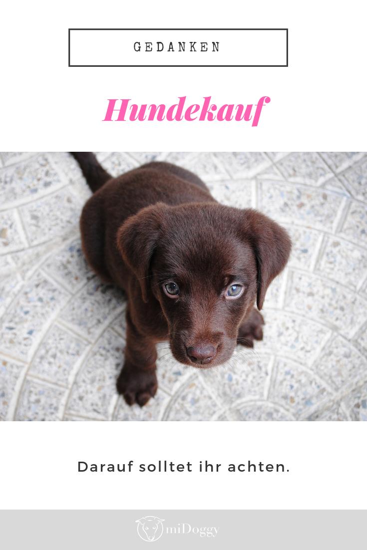 Hundekauf Worauf Sollte Man Achten Hunde Welpen Susse Hunde Welpen