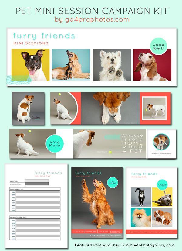 Pet Mini Photography Session Campaign Pet Photography Business